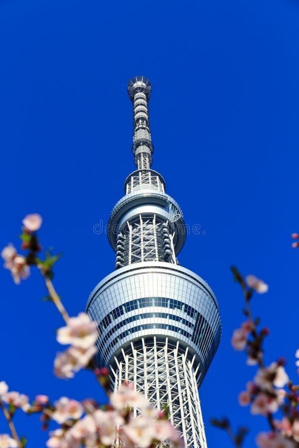 Torretta con i fiori di ciliegia, Giappone dell'albero del cielo di Tokyo immagine stock libera da diritti