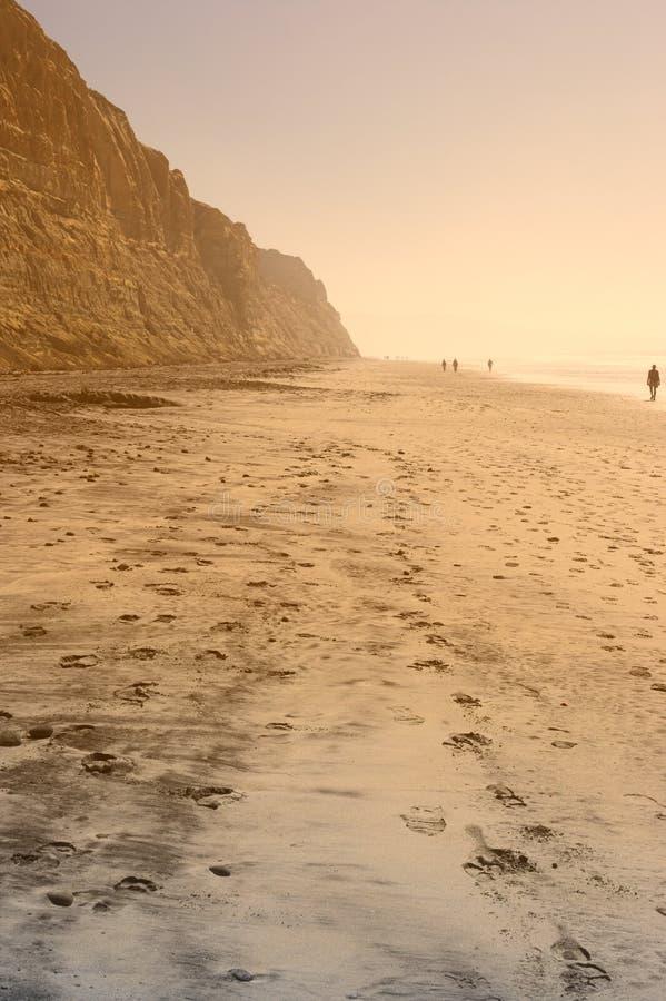 torrey сосенок пляжа стоковое изображение