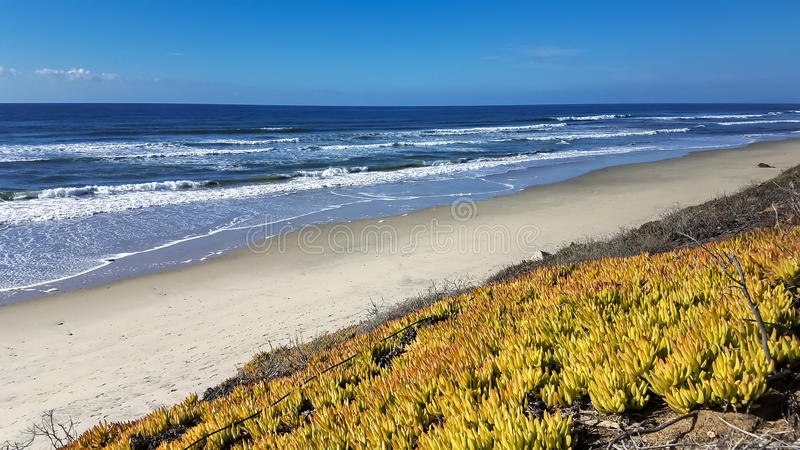 Torrey Pines, San Diego, California royalty free stock photography