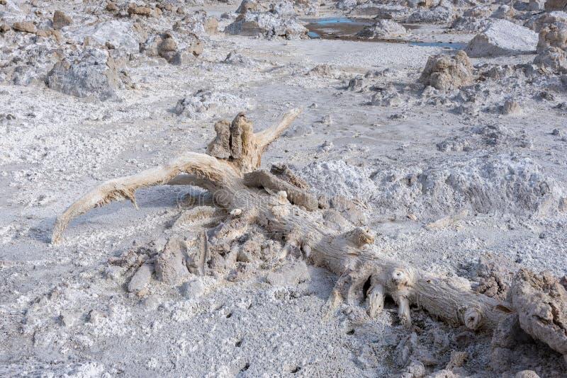 Torri del tufo in mono lago, California immagine stock