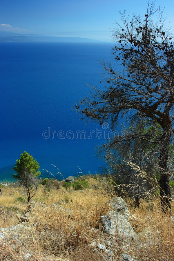 Download Torrid flora stock photo. Image of climate, close, italy - 7376008