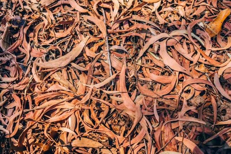 Torrt blad för textur arkivbild