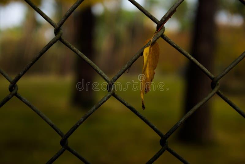 Torrt blad i ett staket royaltyfria foton