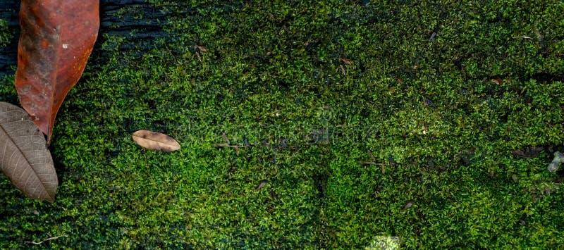 Torrt blad på den wood räkningen för planka med mossa arkivfoton