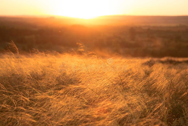 Torrt gräs för höst över solnedgång- eller soluppgångbakgrund arkivfoton
