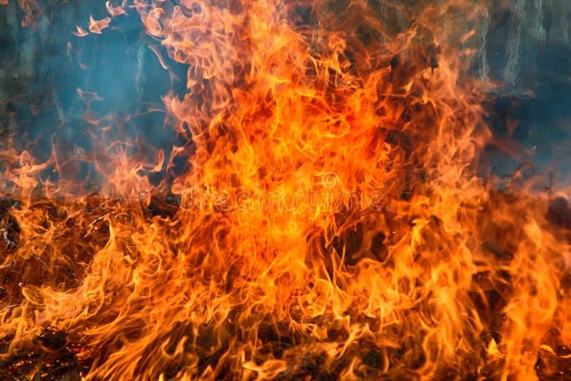 Torrt gräs flammar bland buskar, brand i buskeområde arkivbild