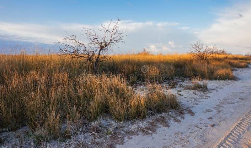 Torrt gräs i öknen som är upplyst vid inställningssolen royaltyfria bilder