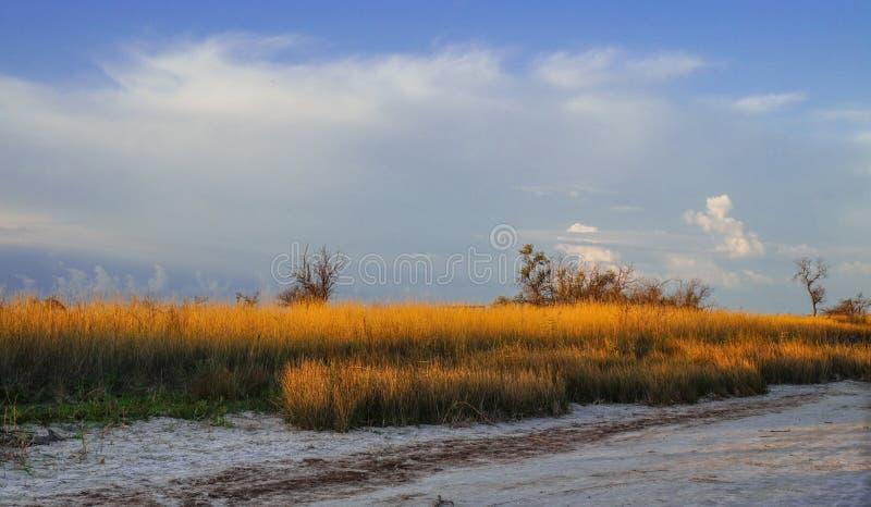 Torrt gräs i öknen som är upplyst vid inställningssolen fotografering för bildbyråer