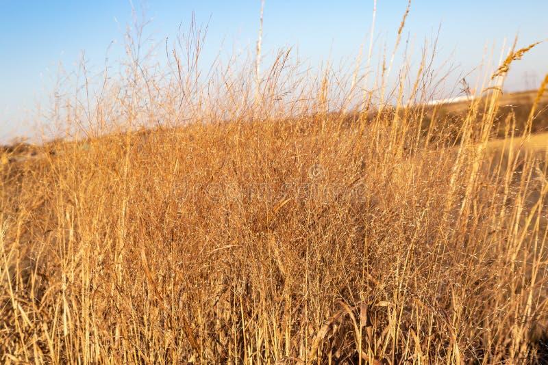 Torrt gräs i nedgången Gretna Nebraska arkivbilder