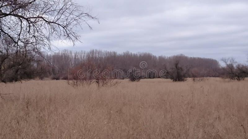 Torrt gräs och träd i stäppen i tidig vår Det ser som höst Asien Ryssland arkivbild