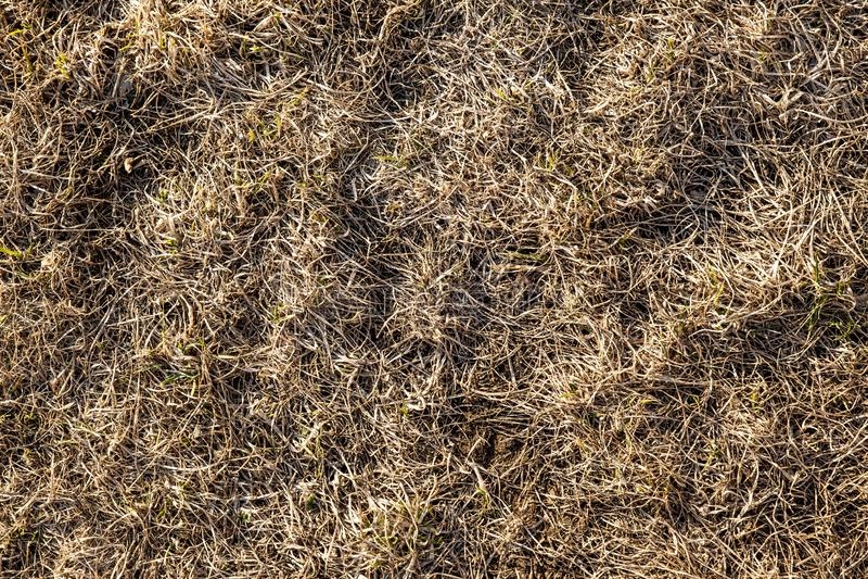 Torrt i fjol gr?s f?r ` s Gammal sugrörbakgrundstextur Till och med det gamla ruttna gräset bryter ungt gräs royaltyfri fotografi