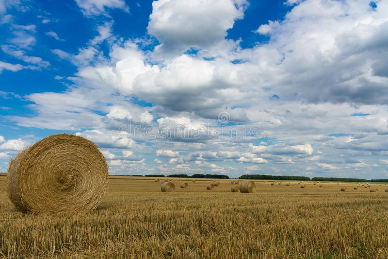 Torrt lantligt fält med höbuntar royaltyfri bild