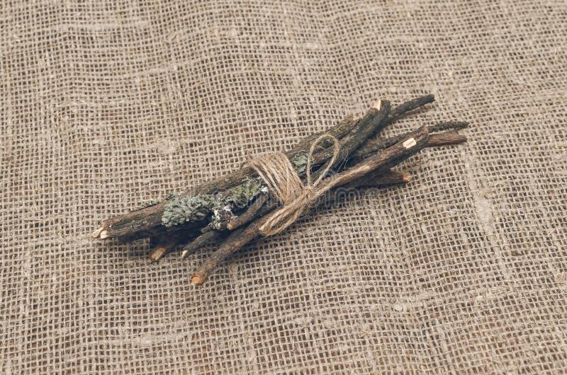 Torrt mossigt sörjer trädfilialer royaltyfria foton