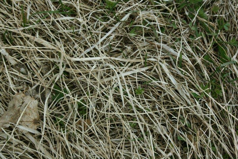Torrt och grönt gräs på jordningen royaltyfria foton