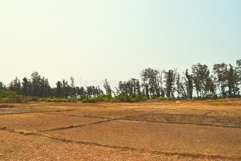 Torrt ointressant jordbruks- land i en varm sommar i tropiska områden - svält och torka arkivfoton