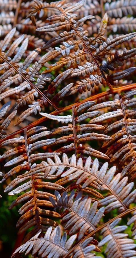 Torrt ormbunkeblad i skogen arkivbilder