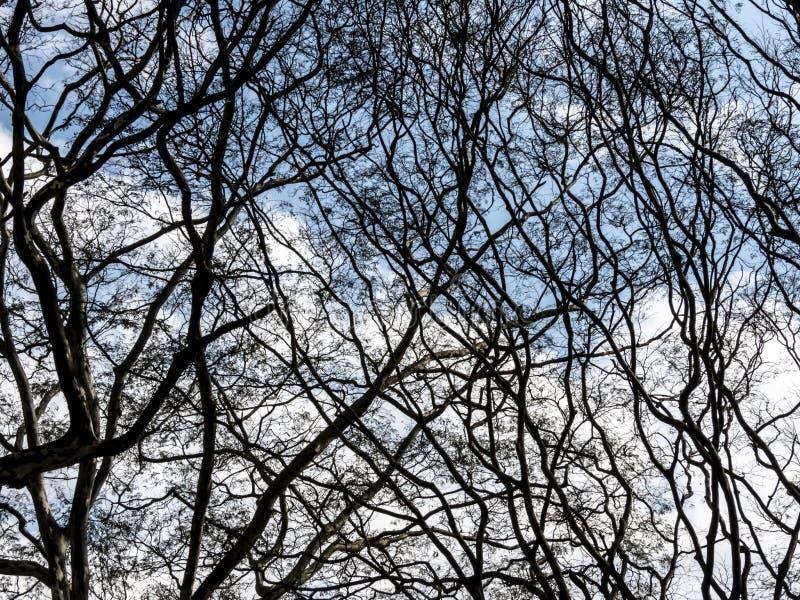 Torrt ris av ett träd royaltyfria bilder