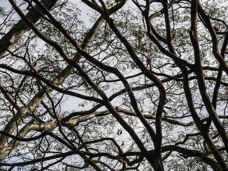 Torrt ris av ett träd royaltyfri fotografi