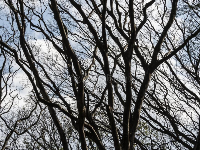 Torrt ris av ett träd royaltyfria foton