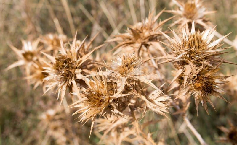 Torrt taggigt gräs utomhus arkivfoto
