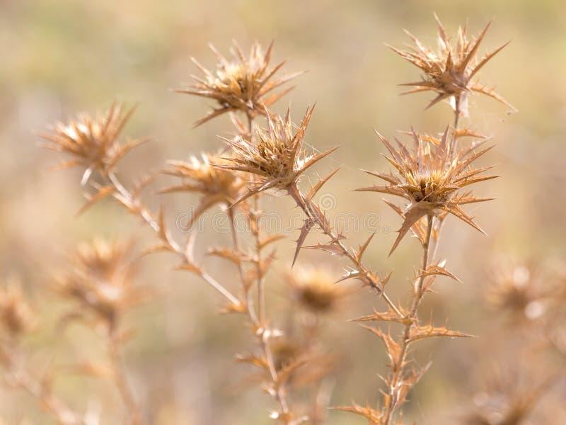 Torrt taggigt gräs utomhus royaltyfria foton