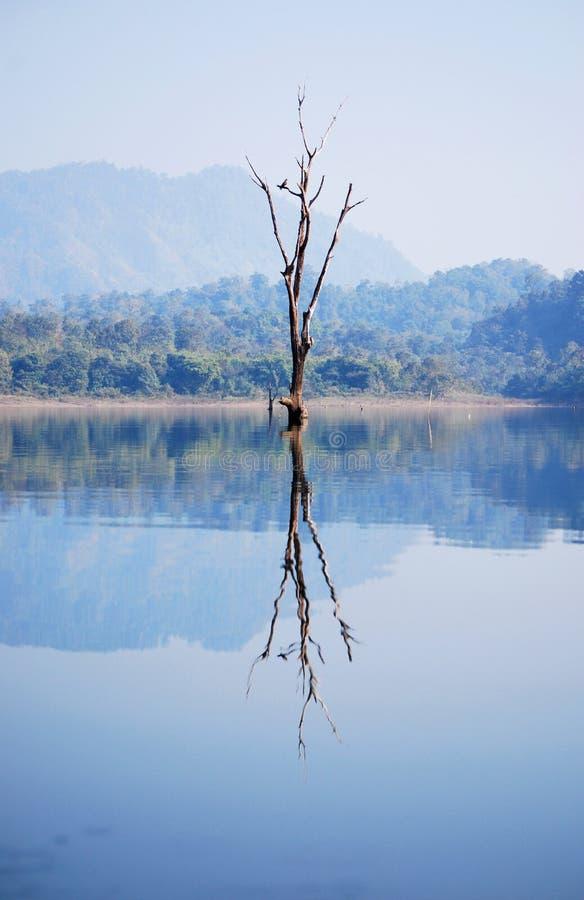 Download Torrt träd fotografering för bildbyråer. Bild av utomhus - 37347671