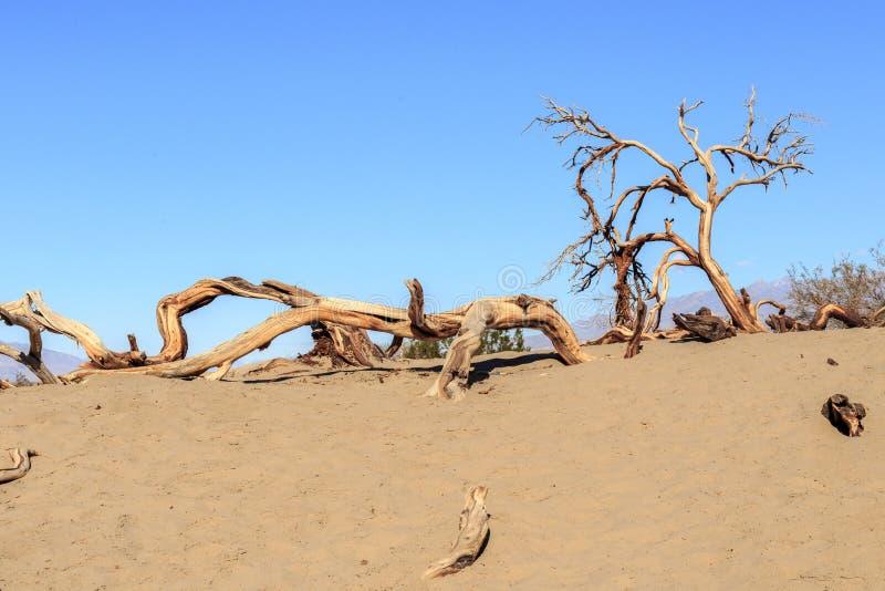 Torrt träd i Death Valley arkivbild
