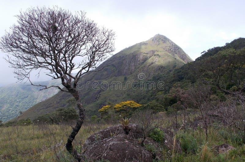 Torrt träd och berg arkivfoto