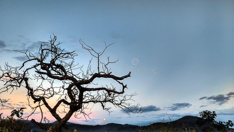 Torrt träd och måne royaltyfria foton