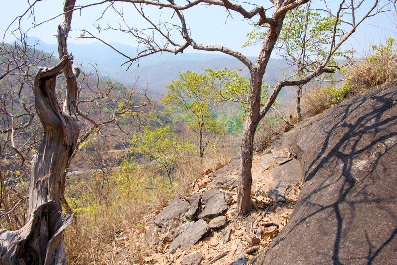 Torrt träd på klippan eller berget med blå himmel på den Op Luang nationalparken som är varm, Chiang Mai, Thailand Varm väder och arkivbilder