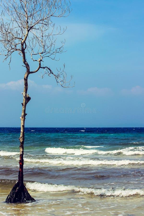 Torrt träd som stiger från havet arkivfoto