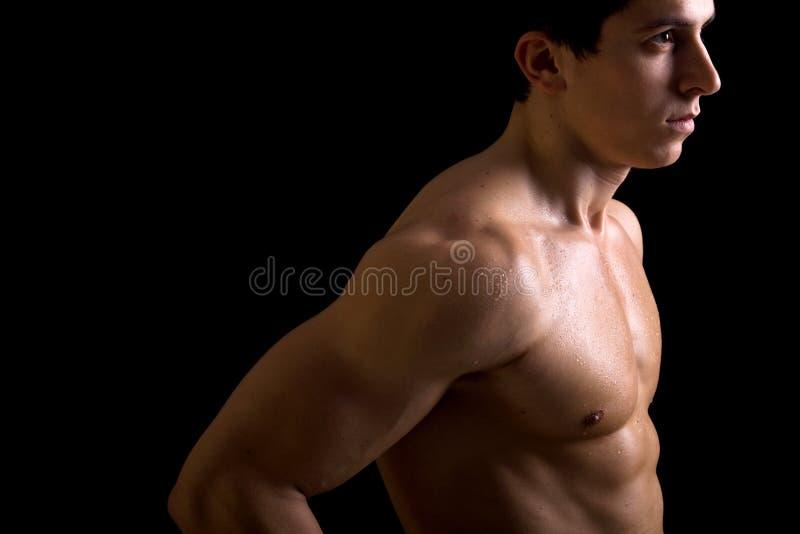 Torse mâle musculaire images stock