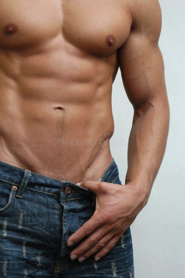 Download Torse mâle musculaire photo stock. Image du beau, hunk - 728792