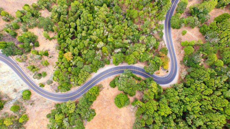 Torsione della strada fra gli alberi fotografie stock libere da diritti