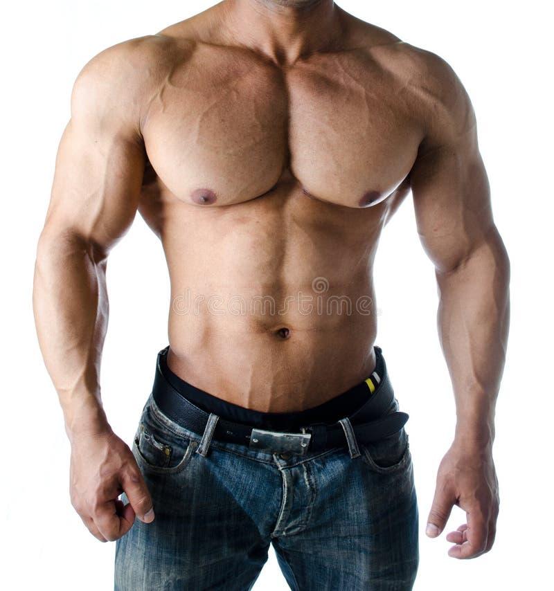 Torso, CPE, Abs e braços musculares do halterofilista masculino imagem de stock