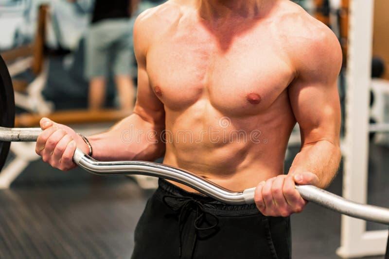 Torso del primer del atleta de sexo masculino en el gimnasio foto de archivo libre de regalías