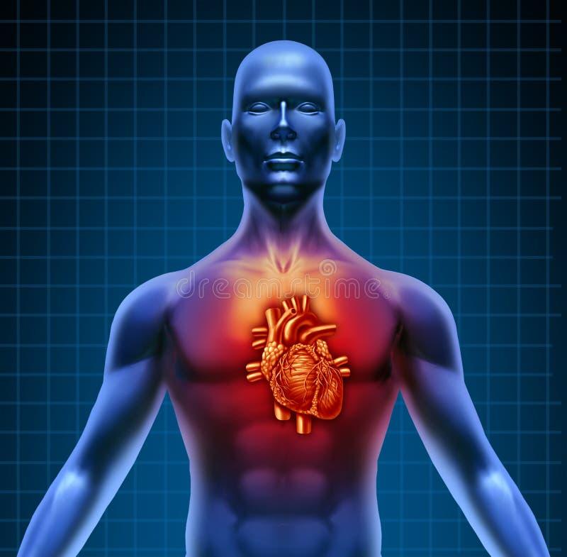 Torso humano com anatomia vermelha do coração ilustração royalty free
