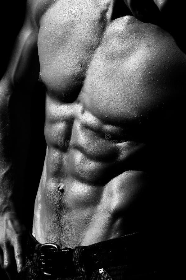 Download Torso Maschio D'increspatura #2 Fotografia Stock - Immagine di corpo, nude: 211128