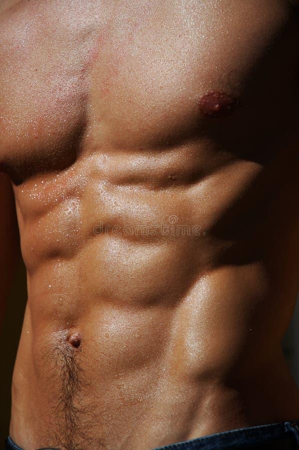 Download Torso Maschio D'increspatura #4 Fotografia Stock - Immagine di addestramento, muscolo: 211162