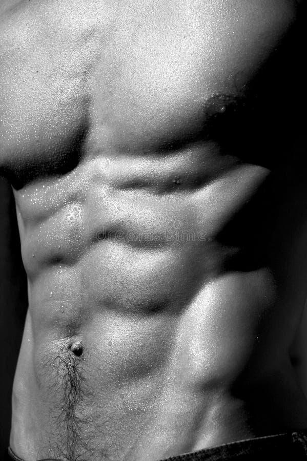 Download Torso Maschio D'increspatura #5 Immagine Stock - Immagine di corpo, giovane: 211161