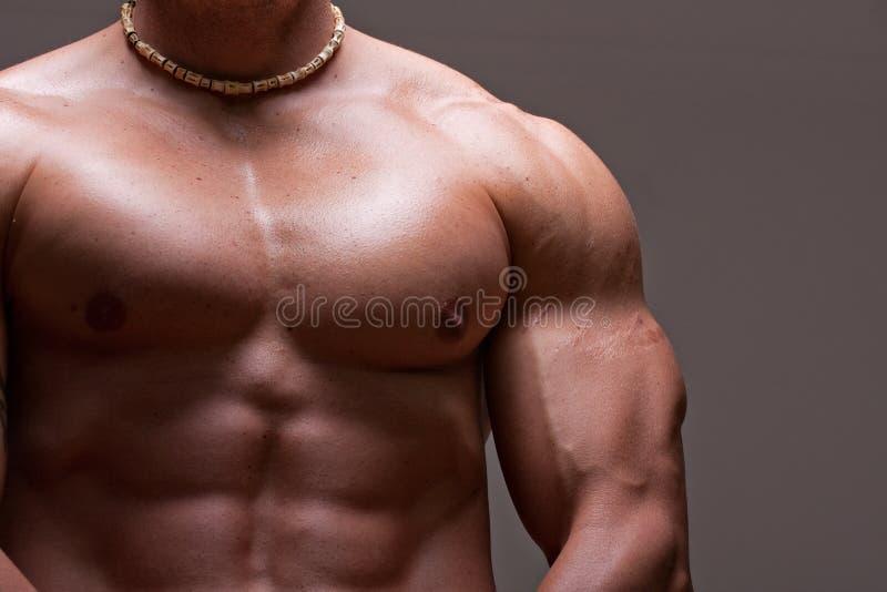 Torso maschio muscolare immagini stock libere da diritti