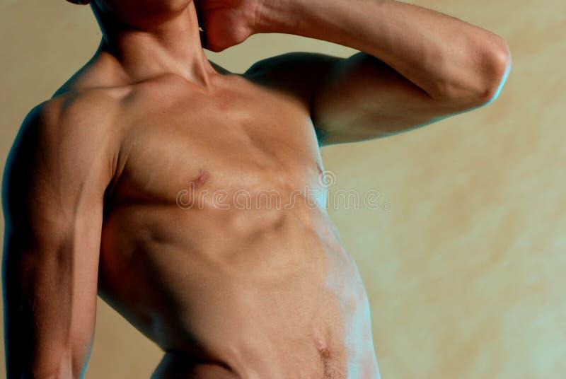 Torso masculino delgado fotografía de archivo libre de regalías
