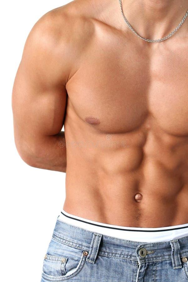 Download Torso muscolare sexy immagine stock. Immagine di bellezza - 7303085