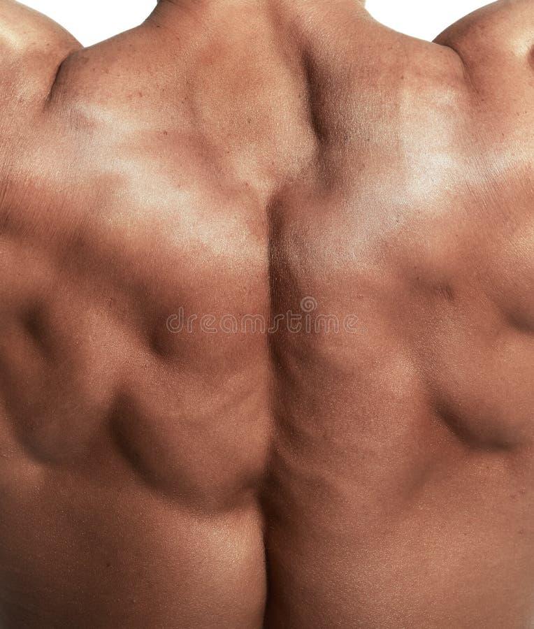 Torso muscular do halterofilista fotografia de stock royalty free