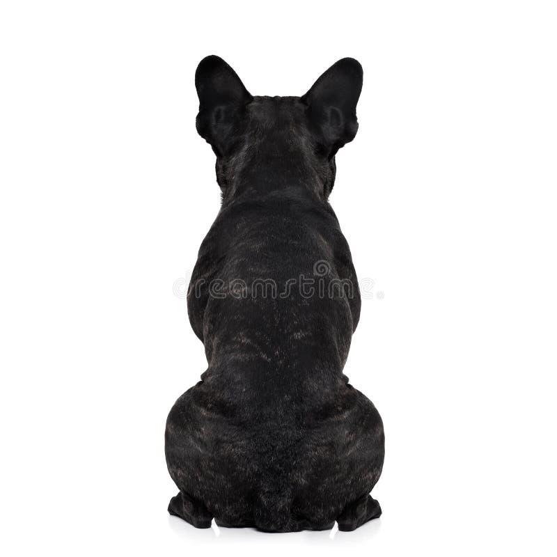 Torso traseiro do cão fotografia de stock royalty free
