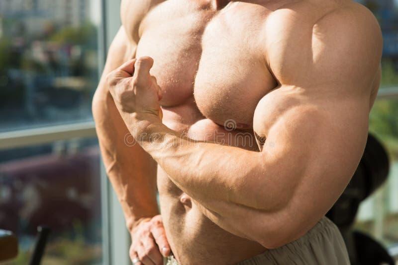 Torso y brazos musculares foto de archivo. Imagen de sano - 64830204