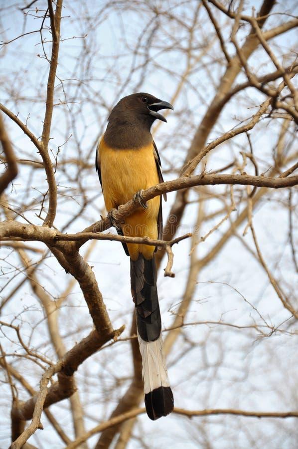 Canta passarinho