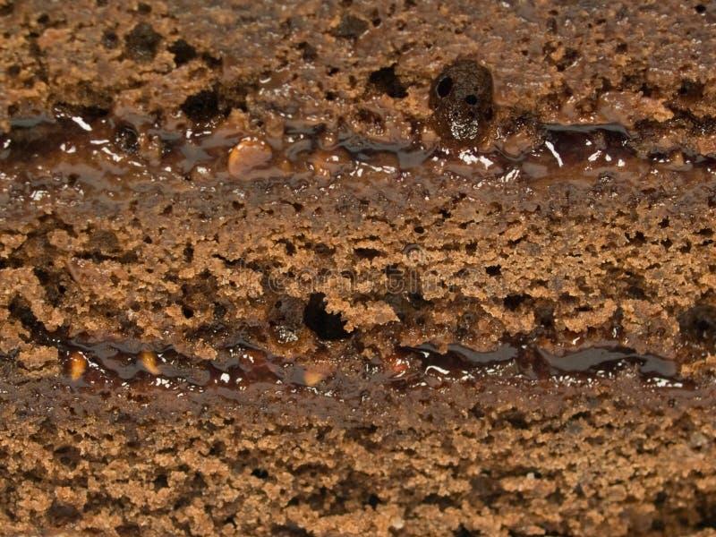 Torta di cioccolato con gli strati immagine stock