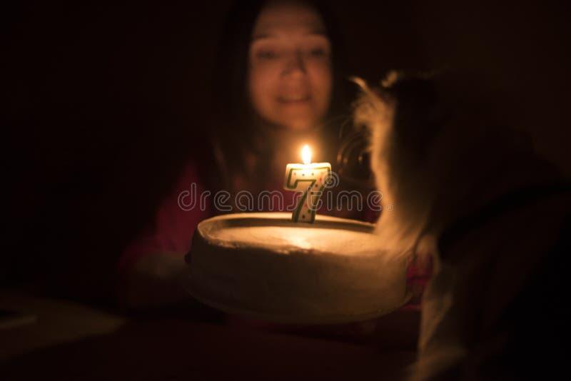 Torta di compleanno con una candela per un gatto fotografia stock libera da diritti