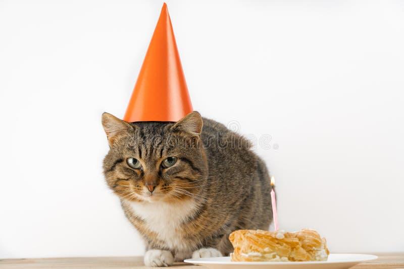 Torta di compleanno del gatto gatto in un cappello festivo fotografia stock libera da diritti